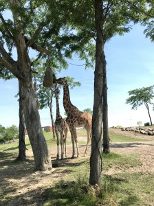 Zoo Emmen 2