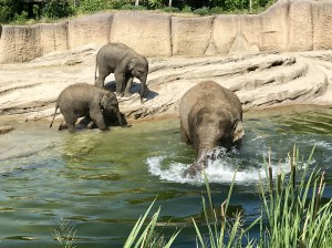 Zoo Emmen